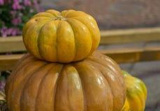 在大特写镜头背景秋天菜季节性纹理的黄色小南瓜 库存图片