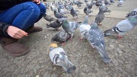 在大理石曲拱的女孩哺养的鸽子 股票视频