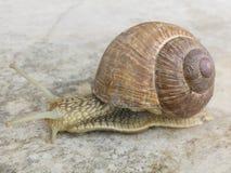 在大理石瓦片的蜗牛 免版税库存图片