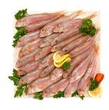 在大理石计划的梭鱼 免版税库存图片