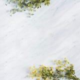 在大理石worktop的装饰野花分支 库存图片