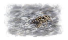 在大的一只怪异的小的蜘蛛 免版税库存图片