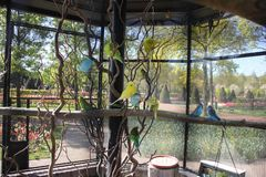 在大笼子的蓝色,绿色和黄色逗人喜爱的五颜六色的budgies在街道上在小动物园里,户外 免版税库存照片