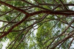 在大自然密林分支树 免版税库存照片