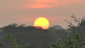 在大草原徒步旅行队的日出在肯尼亚 股票录像
