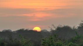 在大草原徒步旅行队的日出在肯尼亚 股票视频