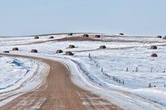 在大草原的冬天 免版税库存图片