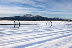 在大草原的冷冬天。 免版税图库摄影