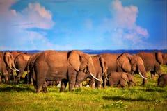 在大草原的大象牧群。 徒步旅行队在Amboseli,肯尼亚,非洲 免版税库存照片