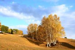 秋天树在草原 库存图片