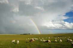 在大草原的彩虹 免版税库存照片