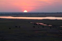 在大草原的日落大象 免版税库存照片