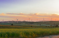 在大草原的日落 库存图片