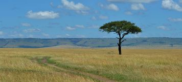 在大草原的树 库存图片