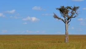 在大草原的树 免版税库存图片