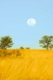 在大草原的满月 免版税库存照片