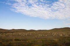 在大草原的牧群 库存图片
