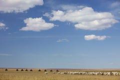在大草原的群 免版税库存照片