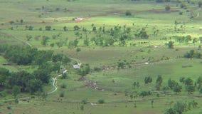 在大草原的野生生物在圭亚那 股票视频