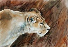 在大草原的雌狮 库存图片
