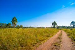 在大草原聚酯的主要公路到森林里 库存照片