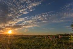 在大草甸的夏天早晨 免版税库存图片