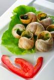 在大蒜黄油的蜗牛 免版税图库摄影
