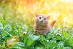 在大蕉的小的小猫 免版税库存图片