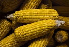 在大袋的干玉米 免版税库存图片