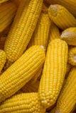 在大袋的干玉米 库存照片