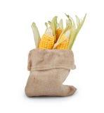 在大袋袋子的黄色新鲜的玉米 免版税库存照片