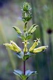 在大西洋沿岸森林看见的野花 免版税库存照片