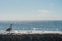 在大西洋海岸的海视图与海喵喵叫 免版税库存照片