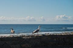 在大西洋海岸的海视图与海喵喵叫 图库摄影