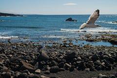 在大西洋海岸的海视图与海喵喵叫 免版税库存图片