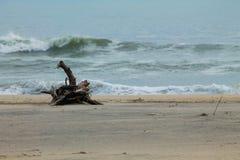 在大西洋海滩的漂流木头 库存图片