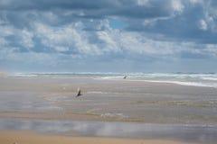 在大西洋的海岸上的飞行海鸥 免版税库存照片