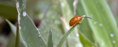 在大西洋雨林看见的昆虫,它的自然生态环境 图库摄影