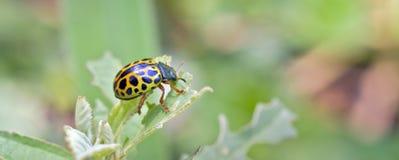 在大西洋雨林看见的昆虫,它的自然生态环境 库存图片