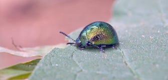 在大西洋雨林看见的昆虫,它的自然生态环境 库存照片