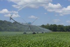 在大豆的领域的灌溉 库存图片