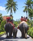 在大象后面的旅游骑马 免版税库存照片