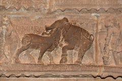 在大象和黄牛之间的战斗 免版税库存照片