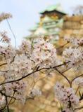在大阪城堡,大阪,日本的樱花 免版税库存照片
