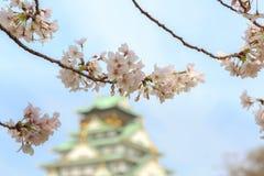 在大阪城堡,大阪,日本的樱花 库存照片