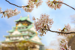 在大阪城堡,日本的樱花 免版税图库摄影