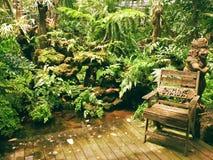 在大阳台的椅子在蕨庭院里 免版税库存照片
