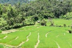 在大阳台的米领域在Chiangmai,泰国 自然的横向 免版税库存图片