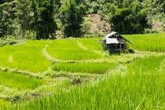 在大阳台的米领域在Chiangmai,泰国 自然的横向 免版税图库摄影