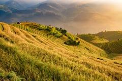 在大阳台的越南美好的风景米领域在moun 库存照片
